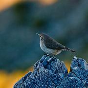 A bird perches at the top of Piestewa Peak in Phoenix, Arizona.