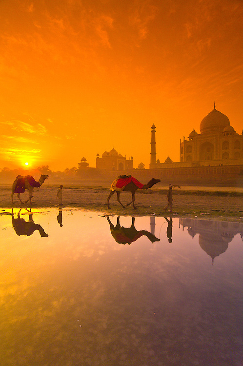 Boys and their camels wade through the shallow water of the Yamuna River, Taj Mahal in background, at sunrise, Agra, Uttar Pradesh, India