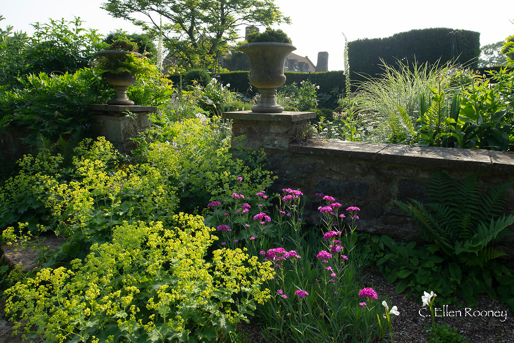 Dianthus 'Devon Wizard' and Alchemillia mollis next to stone urns and a wall at Cothay Manor, Greenham, Wellington, Somerset, UK