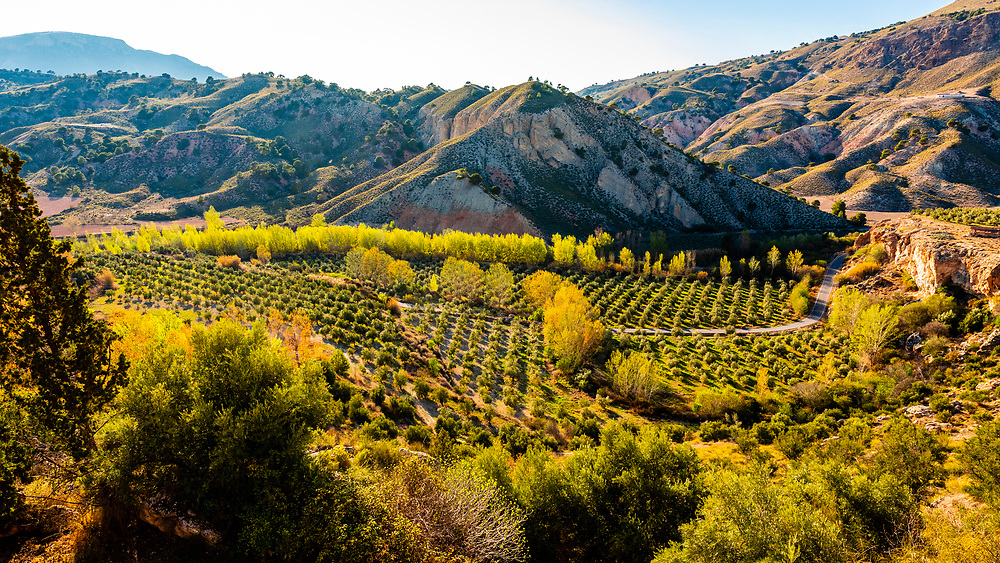 Landscape of olive groves near The Toril aqueduct, which is a natural aqueduct unique in Europe that has been formed by the precipitation of travertine limestone, Granada Province, Andalusia, Spain.
