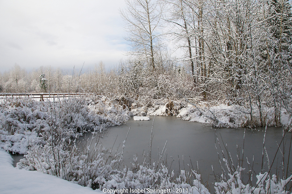 Winter In Courtenay., Courtenay, British Columbia, Canada, Isobel Springett