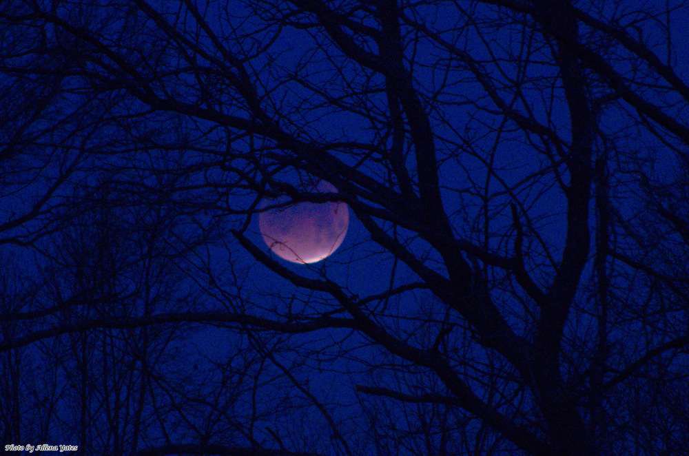 Lunar eclipse nears totality as the moon sets behind a tree on January 31, 2018, near Centerview, Missouri.