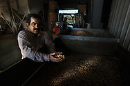 Mohnish Seth holds a handful of almonds in his processing plant in Chico. They said the almond bubble would never burst, but now it has. Prices have fallen 40 percent since August. Mohnish Seth, runs a mid-sized almond-export business and farms almonds in Glenn County as well as in the San Joaquin Valley. January 22, 2009.
