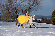 A young woman rides a white horse across a snowy landscape wearing a yellow prom dress.<br /> Picture: Sean Spencer/Hull News & Pictures Ltd<br /> 01482 772651/07976 433960<br /> www.hullnews.co.uk   sean@hullnews.co.uk