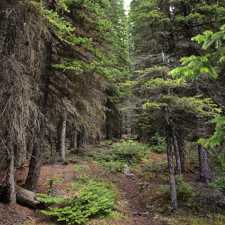 4012 BF ~ Path at Lake Morraine, Banff