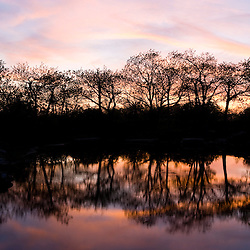 Trees and sunset sky reflections on a pond on Mount Wachusett.  Mount Wachusett State Paek, Massachusetts.