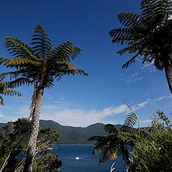 Hike along Tawhitinui Reach, east of Elaine Bay, South Island of New Zealand