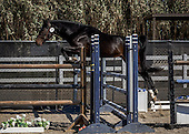 Horse No 56