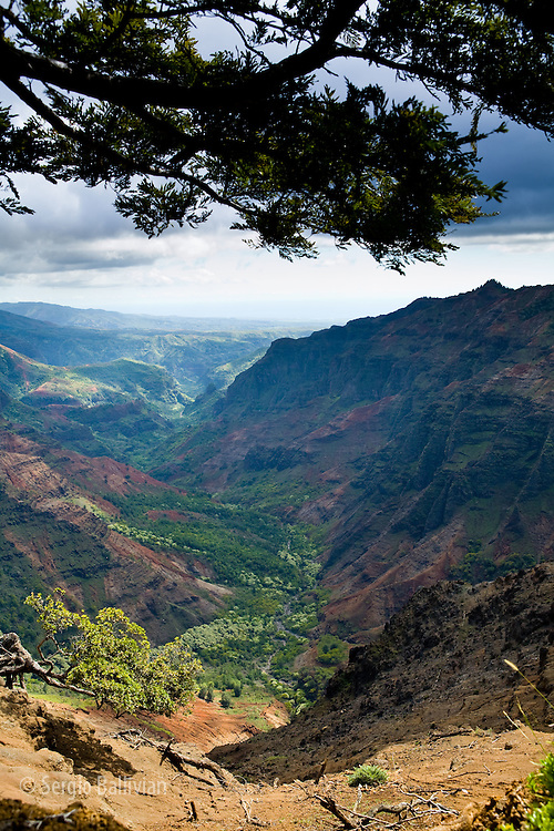 Views of Waimea Canyon from the rim show steep canyons,  lush vegetation and erosion.