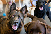 200 dogs having a great time at Barkley Manor dog daycare in Ponsonby, Auckland.<br />