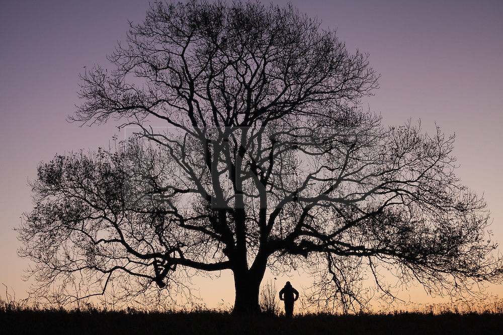 © Licensed to London News Pictures. 05/10/2016. Petersfield, Hampshire, UK.  A man walking under a tree on Butser Hill as first light unfolds over the South Downs National Park in Hampshire this morning, 5th October 2016. Today will be another dry and sunny, but breezy, autumn day in the south of England. Photo credit: Rob Arnold/LNP