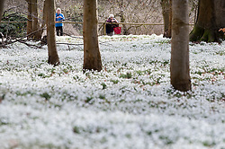 © Licensed to London News Pictures. 19/02/2017. Welford, UK.  Visitors admire a white carpet of snowdrops in the woods at Welford Park near Newbury. Welford Park, where The Great British Bake Off is filmed every summer, is only open for visitors for five weeks in the year - until March 5th. Warmer temperatures are expected in the UK over the next few days after the recent cold spell.  Photo credit: Peter Macdiarmid/LNP