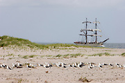 "Windjammer ""Astrid"" of Adler-Schiffe passing the Southern tip of Sylt, the Hörnum Odde. Segulls having a rest."