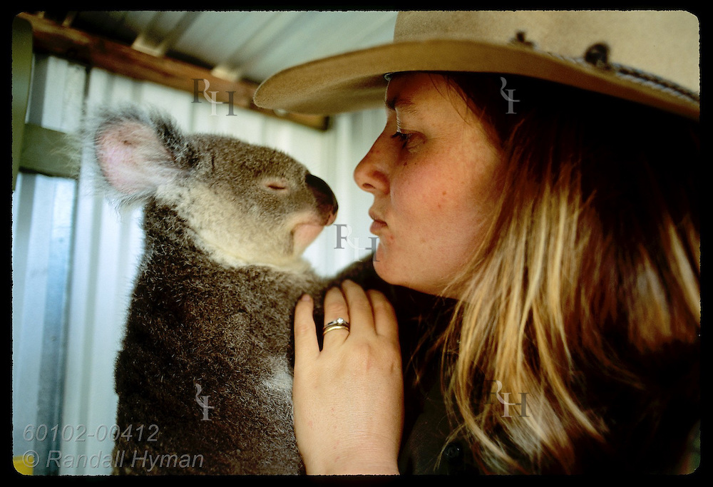 Yr-old koala squints at vet nurse Lynne Douglas at study/rehab centr; U of Queensland, Brisbane Australia