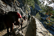 Horses on the John Muir Trail..