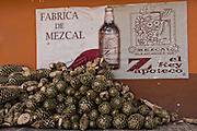 A pile of fresh blue agave hearts outside an artisanal Mezcal distillery November 5, 2014 in Matatlan, Mexico. Making Mezcal involves roasting the blue agave, crushing it and then fermenting the liquid.
