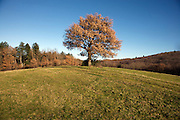 tree on top of a hill in a grassland landscape