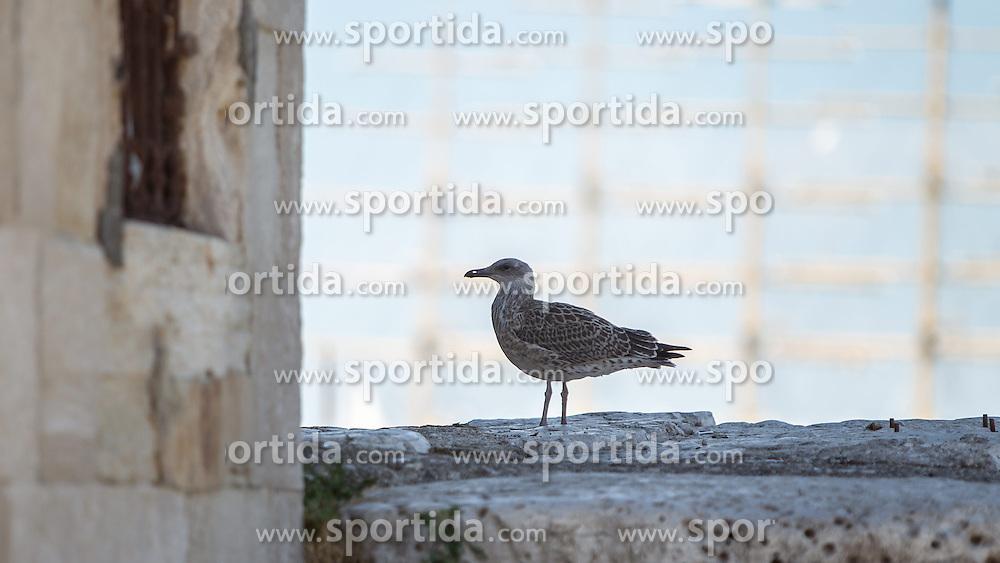 THEMENBILD - URLAUB IN KROATIEN, eine Möwe aufgenommen am 03.07.2014 in Rovinj, Kroatien // a seagull in Rovinj, Croatia on 2014/07/03. EXPA Pictures © 2014, PhotoCredit: EXPA/ JFK