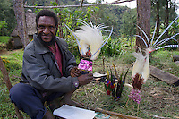 Men at Payakona Village with Bird of Paradise plumes to be used on headdresses. Mount Hagen vicinity in the Western Highlands Province, Papua New Guinea..