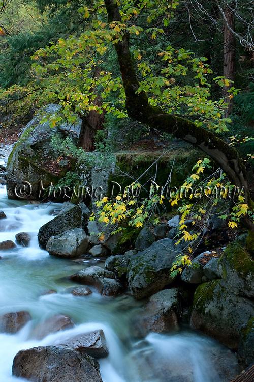 The swift waters of Tenaya Creek rush over boulders in Yosemite's Tenaya Canyon.