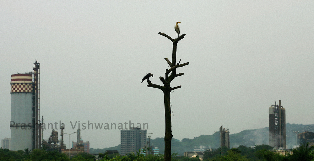 Birds perch on a dead tree stump in front of chemical factories in Mumbai, India, on Wednesday, September 19, 2007. Photographer: Prashanth Vishwanathan/Bloomberg News