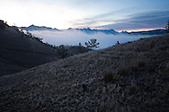 Mule deer, dawn, Absaroka Mountains, west of Livingston, Montana, Property Released