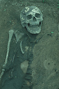 Valdivian Skeleton<br />