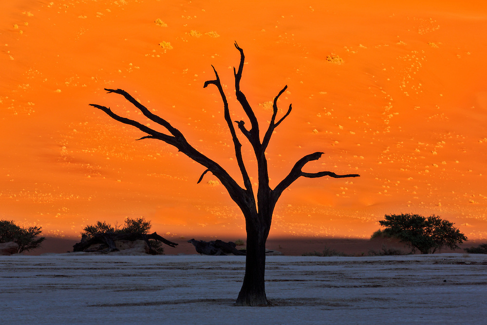 The rising sun lights up the dune behind the silhouetted camelthorn tree at Deadvlei.