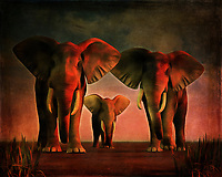 """Hi There!"" is the English translation of this piece. You are being greeted warmly by a family of elephants against a scenic, calming, natural backdrop. These elephants are aware that you have come closer, and they are welcoming you to what is likely their home. What are you going to do next? Is there even something you can say in a situation such as this? Bonjour La is a beautiful scene of nature, and it is available in a variety of forms. This includes canvas prints, metal prints, acryl prints, or framed prints. This piece is also available across numerous interior products."