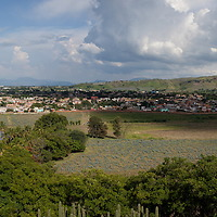 Tequila Valley Panoramic Image --- Image created for http://tastetequila.com