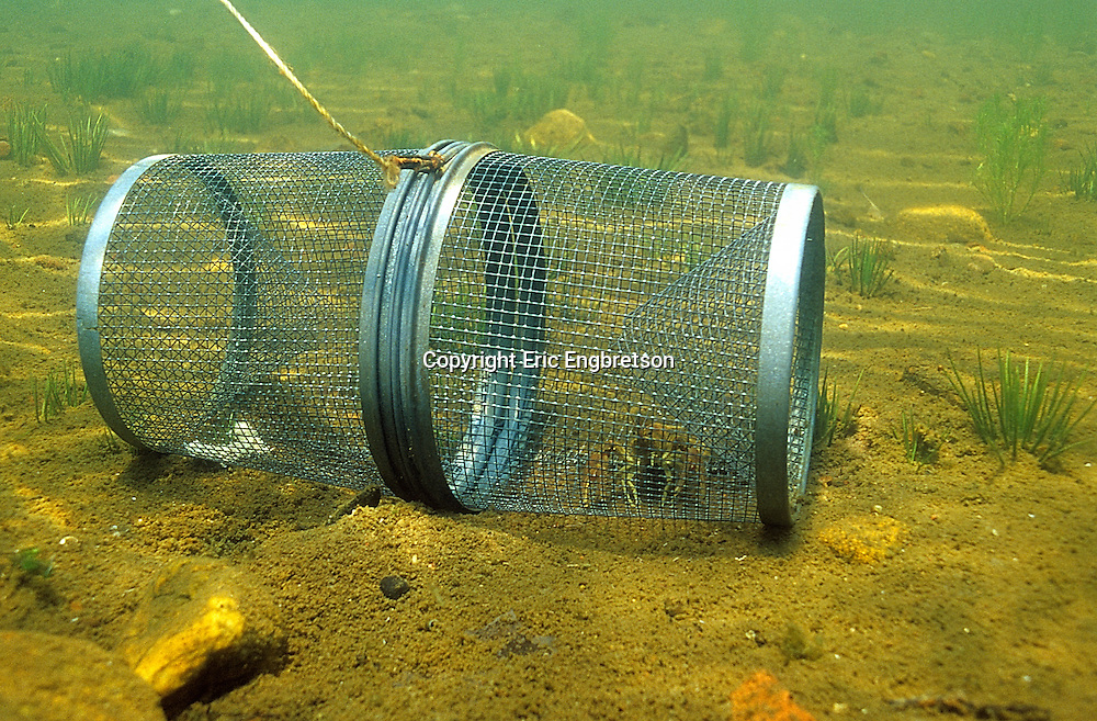 Crayfish Trap<br /> <br /> ENGBRETSON UNDERWATER PHOTO