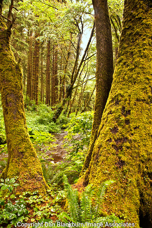 Siuslaw National Forest Oregon Coast