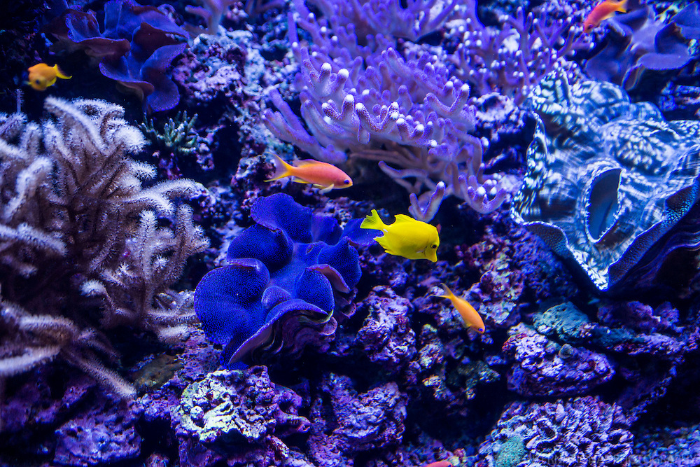 Corals & Fishes