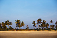 A palm-lined beach in the southern part of Goa, India.