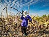 2017 Sugarcane Harvest