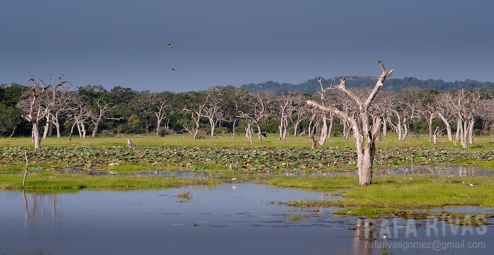 Yala National Park, February 2011. Photo Rafa Rivas