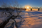 Fallen tree along the Red River with the Waterfront Bridge from Stephen Juba Park.<br />