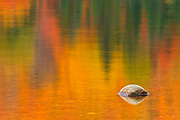 Rock and autumn  colors reflected in Lac Wapizagonke. Great Lakes - St.  Lawrence Forest Region.<br />La Mauricie National Park<br />Quebec<br />Canada
