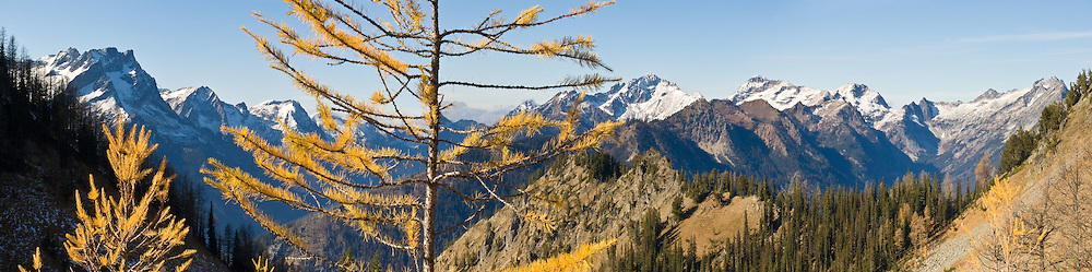 From the flanks of Carne Mountain, look into Glacier Peak Wilderness Area to see Buck Mountain (8573 feet, left), Liberty Cap, Fortress Mountain (middle right), Chiwawa Mountain and Spider Gap, Washington, USA. In mid-October, view the beautiful golden larch fall colors at their peak. The Carne Mountain trail steadily ascends 3600 feet in 7 miles round trip. Carne Mountain is located north of Lake Wenatchee (a side trip from US Highway 2) in Wenatchee National Forest, where the Chiwawa River meets Phelps Creek. Panorama stitched from 6 images. Published 2009 on web site www.sustainabilityfoundation.com, Kirkland, Washington.