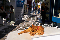 Grece, Cyclades, chat des rues à Mykonos // Greece, Cyclades, street cat in Mykonos