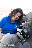 Penguin low res