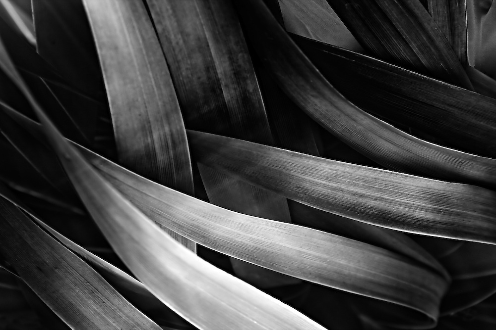 Monika Rawat, she is celebrating the colours, textures and patterns of various leaves amidst the tranquillity of nature - focusing only on abstracts. Through her collection, she has tried to capture the intricacies and beauty of leaves that we see everyday, especially during the fall, with myriad of colours, ranging from green, orange, red to a final decaying brown. It is difficult to adopt the pace of nature, but if you make conversations with it, you will understand the beauty and the depth of each and every object therein. She has tried to give them the look and feel of an abstract painting, evoking varied emotions from subtle purples to blue hues and sometimes giving them a warm feeling to sometimes going overboard and overshadowing images with coldness and bitterness of a bleeding emotion...Available as signed limited edition art prints, printed on non-fine art / fine art paper with archival pigment inks and coated with UV protection spray. A Certificate of Authenticity will be provided by the artist.