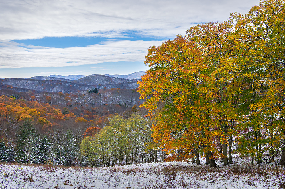 Snow coats the landscape and blaze orange autumn foliage coats the snow at this mountain overlook in Randolph County, West Virginia.