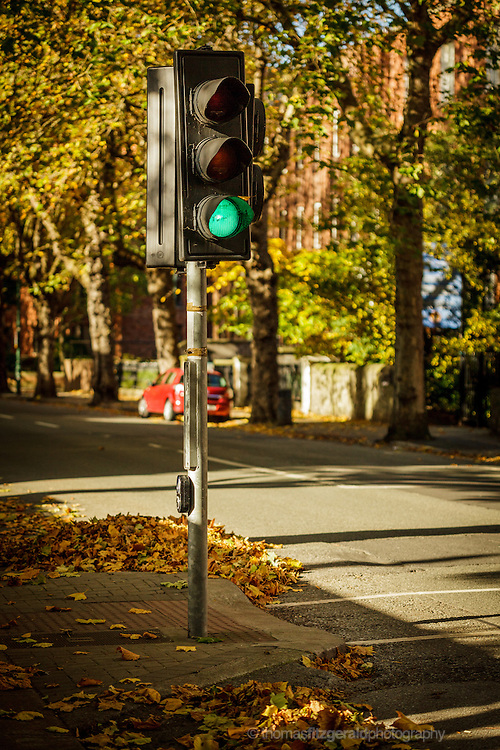 Autumn in Ireland, 2012: the traffic lights stands surrounded by fallen autmn coloured leaves