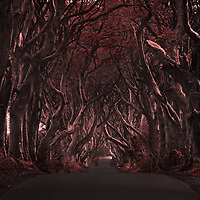 The Dark Hedges, Ireland could be easily missed. I was enchanted by its mystery. Such a visually conceptual place. Shot in the fall I was lucky to find some autumn color in the leaves. Inspired by its mystery I worked with the fall colors to lead you down the path.