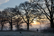 A silhouette of a man out walking his dogs in the countryside at sunrise.