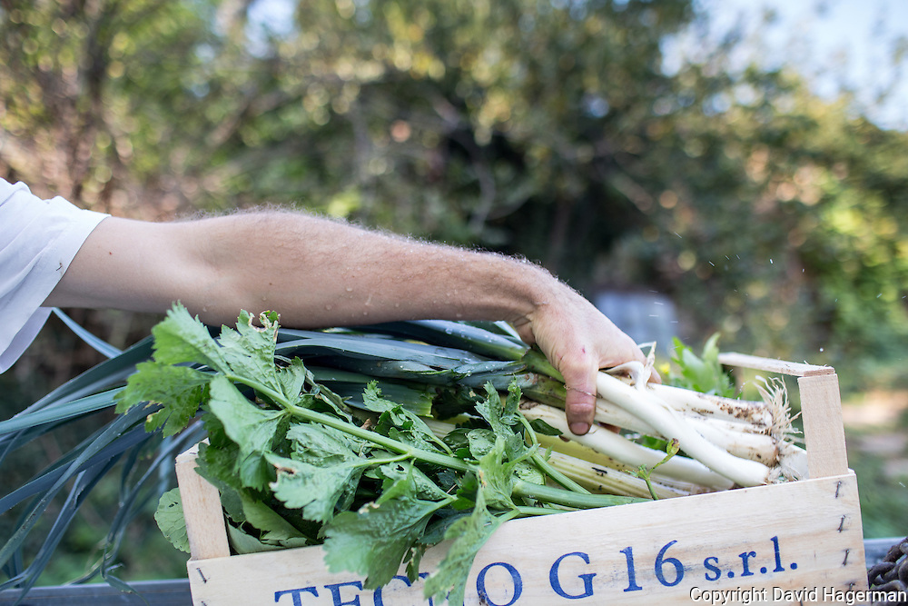 Vegetables and wild mushrooms foraged on the propery Birrificiao Agricole di Montcalieri