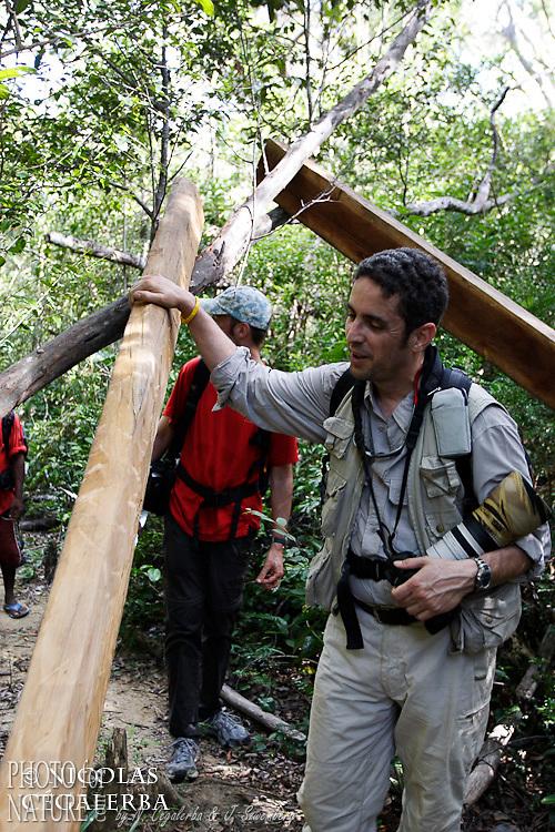 Mission Propithèque de Perrier dans l'Andrafiamena