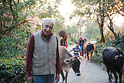 Palampur. India: Navin Sarin is the genial owner of the Country Cotttages, in the Chandpur Tea Estate, which are simple cottages in the midst of a working tea garden at the foot of the Himalayas. His grandfather was the original owner after the British left (Photo: Ann Summa).