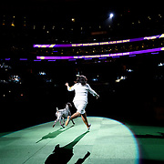 "February 16, 2016 - New York, NY : ""Vjk-Myst Garbonita's California Journey,"" a Pointer (German Shorthaired), enters the arena for Best of Show judging -- which she would wing -- during the 140th Annual Westminster Kennel Club Dog Show at Madison Square Garden in Manhattan on Tuesday evening, February 16, 2016. CREDIT: Karsten Moran for The New York Times"